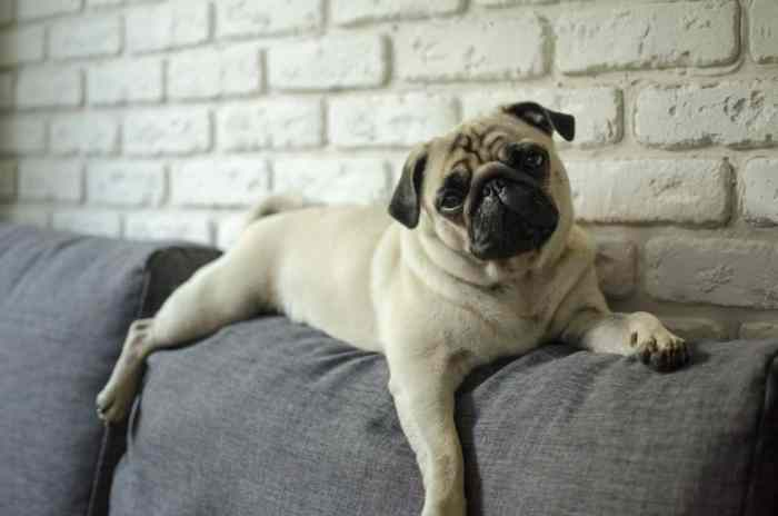 Do You Have a Bored Dog? Here's What You Can Do to Entertain Them