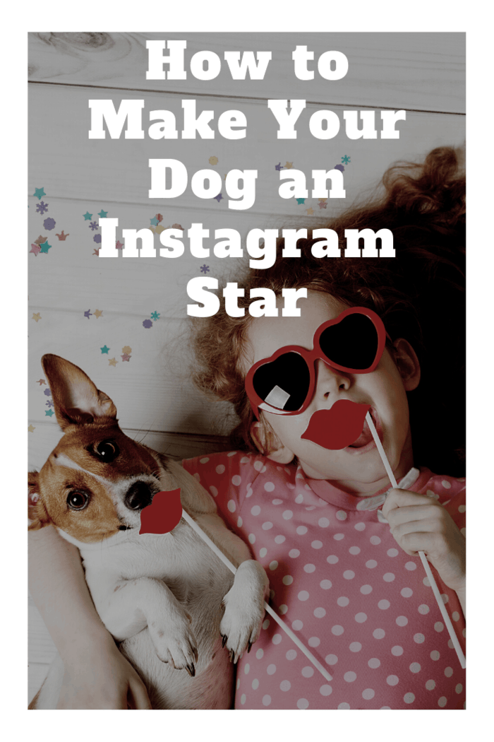 Before trying to make your dog into a social media sensation, you first need to consider if he or she is the right canine for the job.