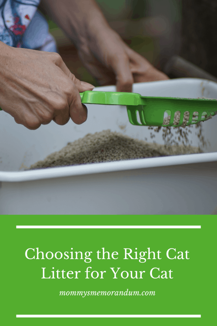 Clay cat litter is possibly the most common type available.