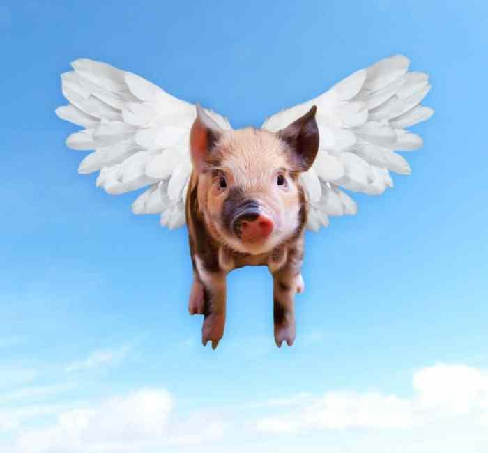 hyperbole when pigs fly