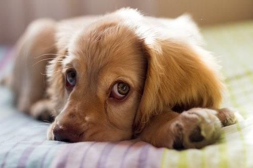5 Things to Know Before Getting Any Pet