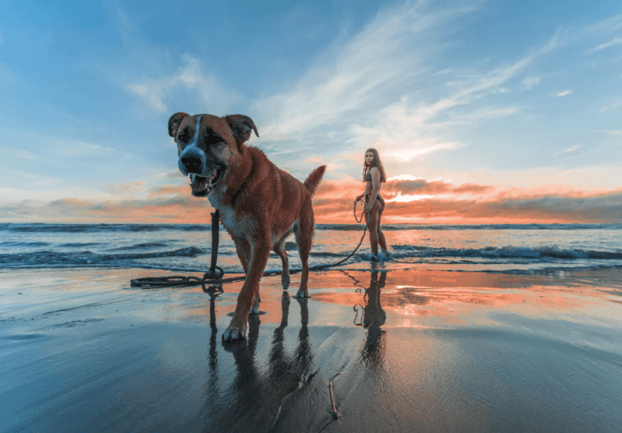 4 Things to Consider Before Getting a Dog