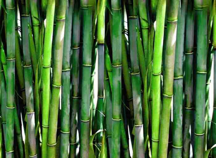 Bamboo stalks for a sustainable bamboo bedroom