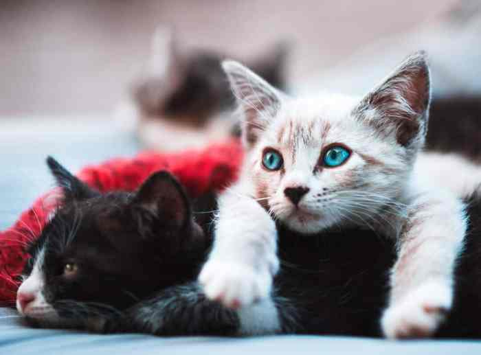 https://mommysmemorandum.com/choose-cat-litter/