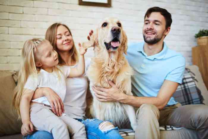 Top Tips on How to Keep Your Home Tidy When You have Pets