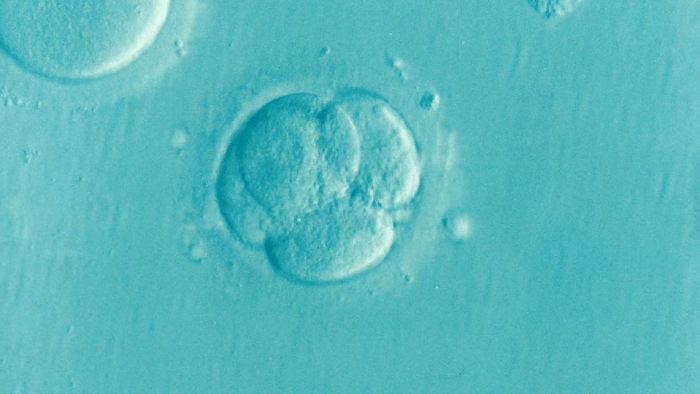 How Fertility Tests Work and What You Need to Know