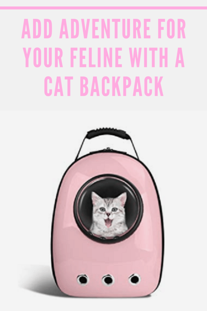 Cats are curious and playful so kitten toys are excellent but add adventure with a cat backpack that allows you to spend endless hours with your feline.
