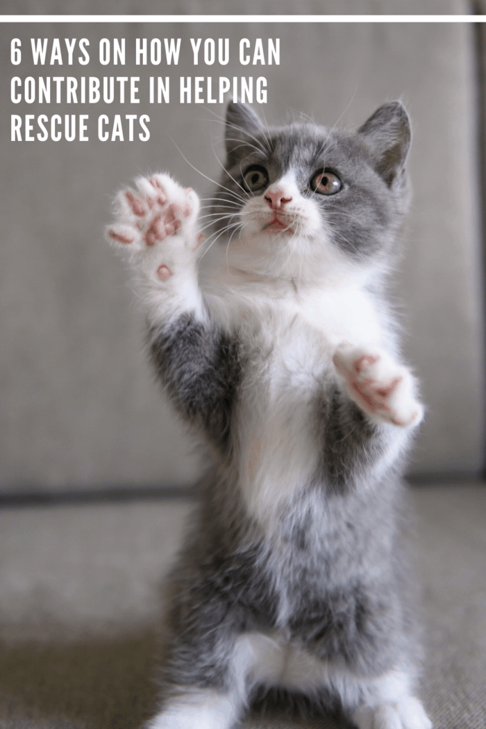 Here are some fulfilling ways on how you can contribute to helping rescue cats. and provide a fur-ever home for kittens.