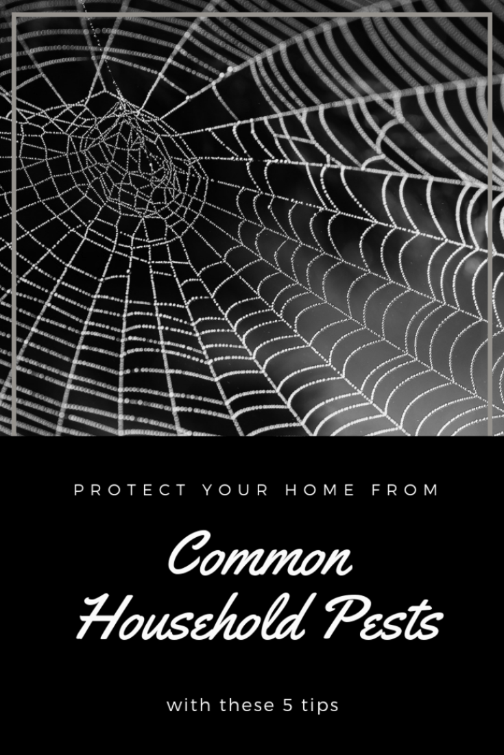 Learn how to protect your home from some of the more common household pests by following these tips.