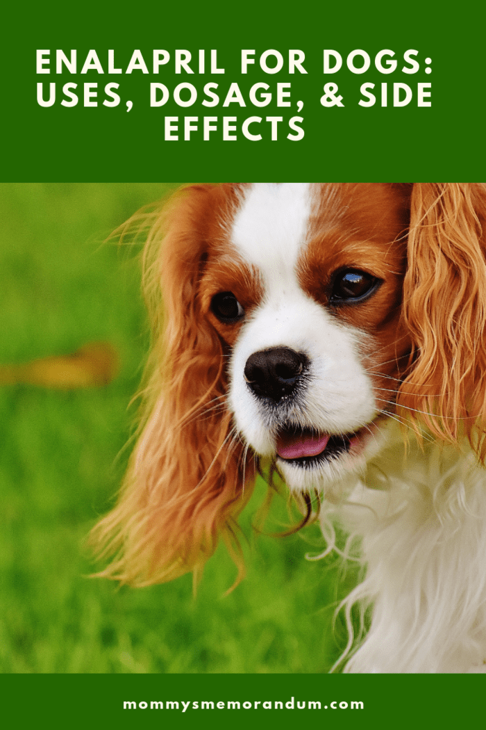 Here's what you should know about the uses, dosage, and side effects of enalapril for dogs.