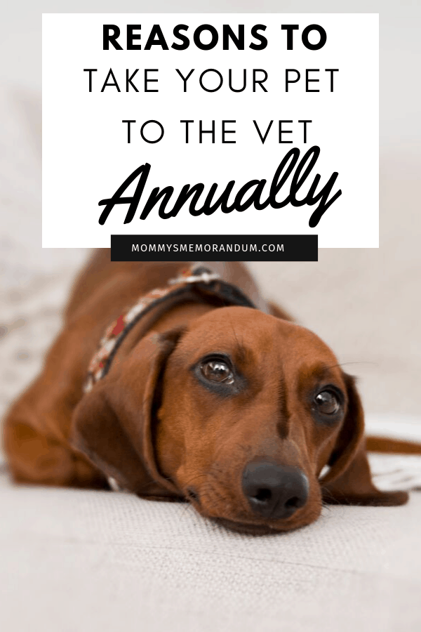 Pets also need a regular checkup as we humans do. Find out why you need to take your pet to a vet annually.
