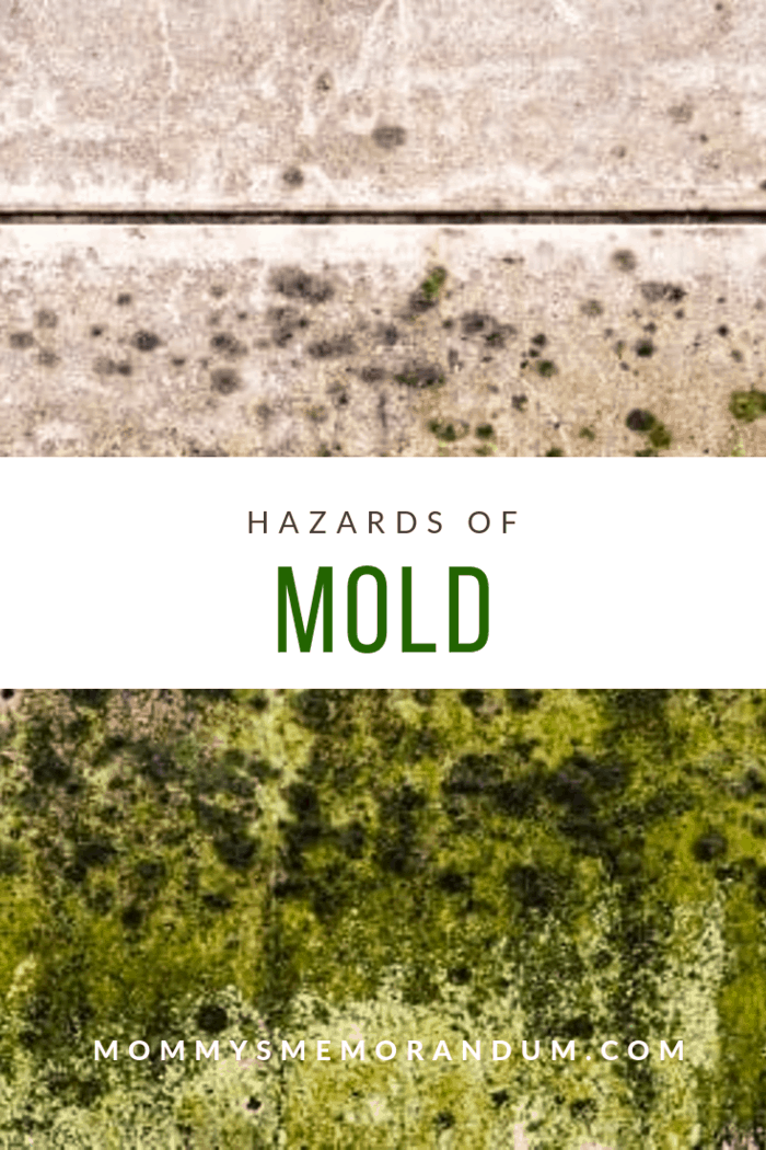 Molds, although they are a very common problem, can cause serious health issues. Learn more about the hazards of mold.