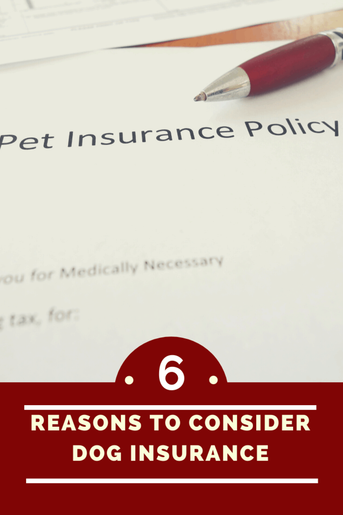 With pet insurance, you will have peace of mind knowing that medical costs will be catered for by your insurer, provided the condition is covered under your policy and your pet doesn't have any conditions excluded due to any pre-existing conditions.