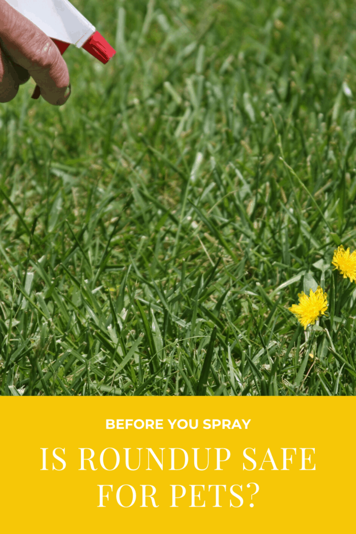 To be safe, if you're worried about pet safety when using Roundup, it's best not to use it at all.