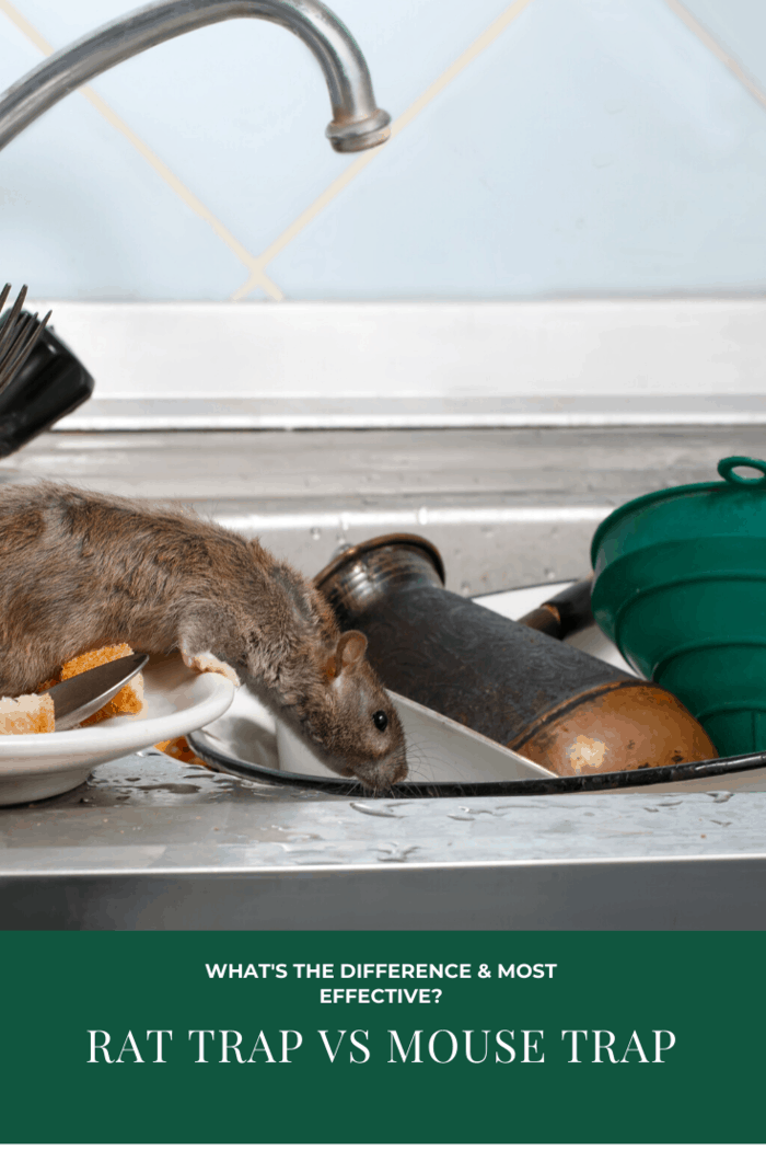 Rodents including mice and rats are a nightmare for every household and even for a property owner.