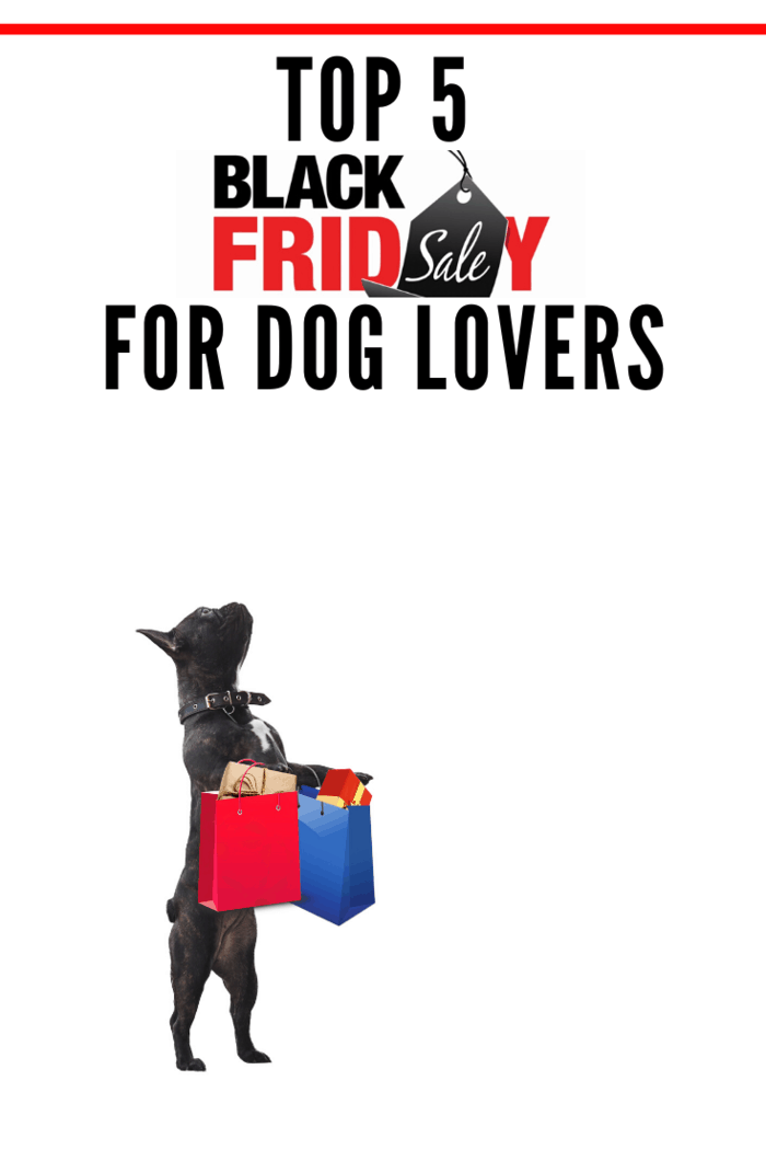 black dog standing on hind legs with shopping bags