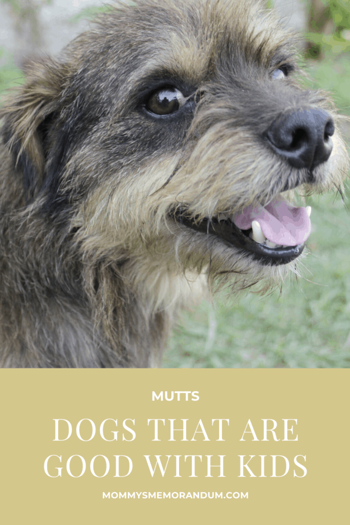 As people who whole-heartedly believe in rescuing dogs, don't overlook a dog because they're not the specific breed on this list.