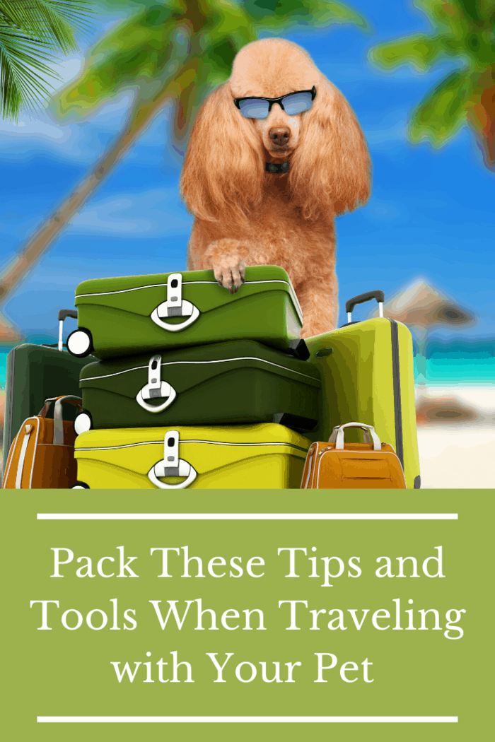 Traveling with pets can be fun. The key is to make sure that they are properly cared for while away from home