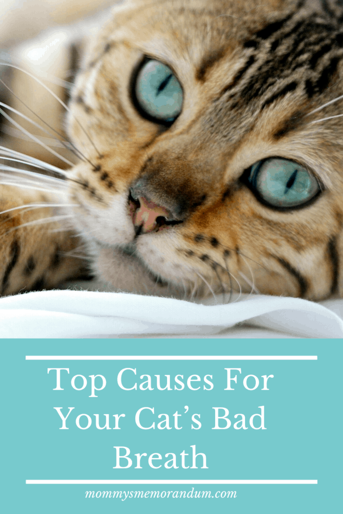 there really are a number of conditions that can cause bad breath in cats.