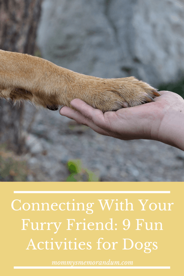 Connecting With Your Furry Friend: 9 Fun Activities for Dogs. Your dog will be happy with you doing any of these activities.