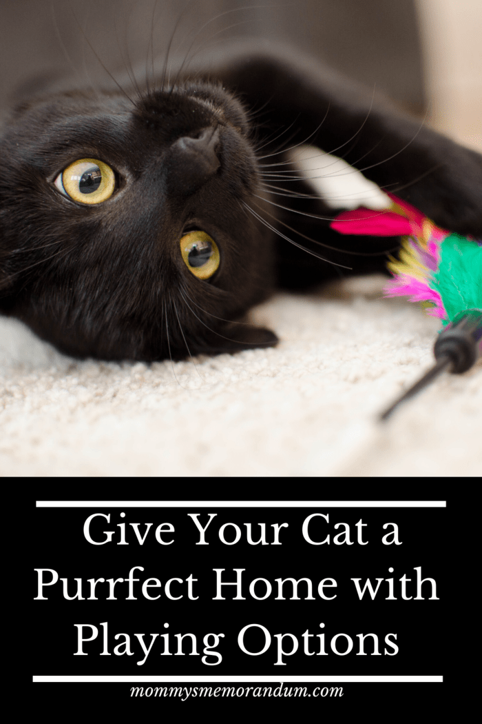 Getting a little play structure for your cat is a good start, even if they just want to fool around with the box, but there are more ways than that to help give them fun options for play.