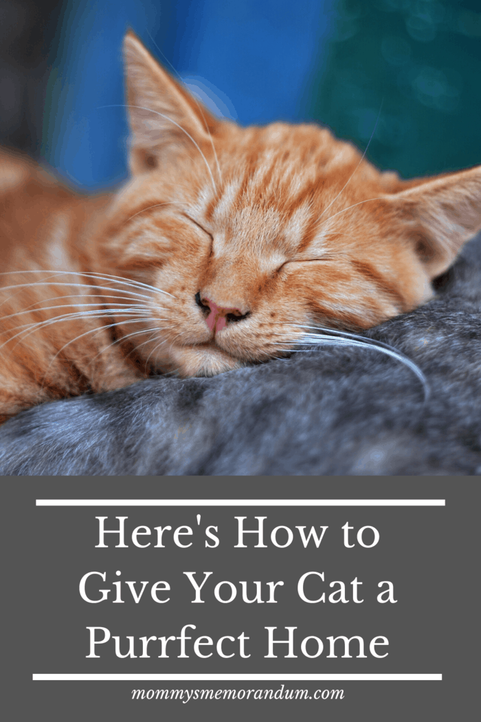 """If you need some help figuring out how to give your cat a """"purrfect"""" home, you should check out these simple tips."""