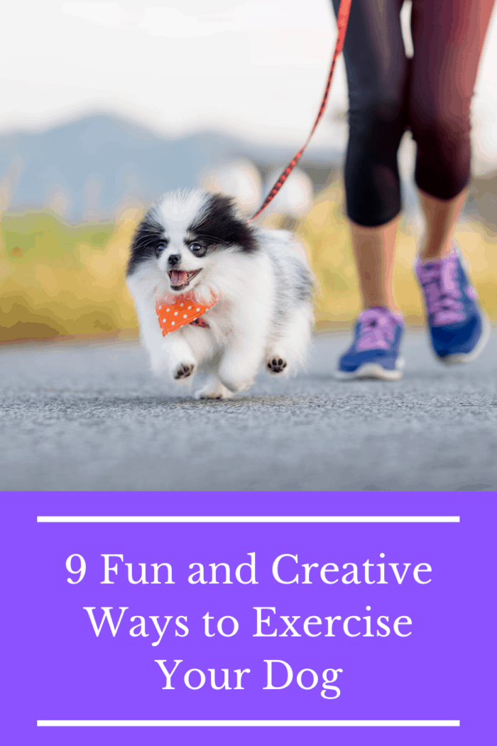 Running together will help you both shed pounds and it will also get you out in the world to meet all sorts of interesting people - and dogs.