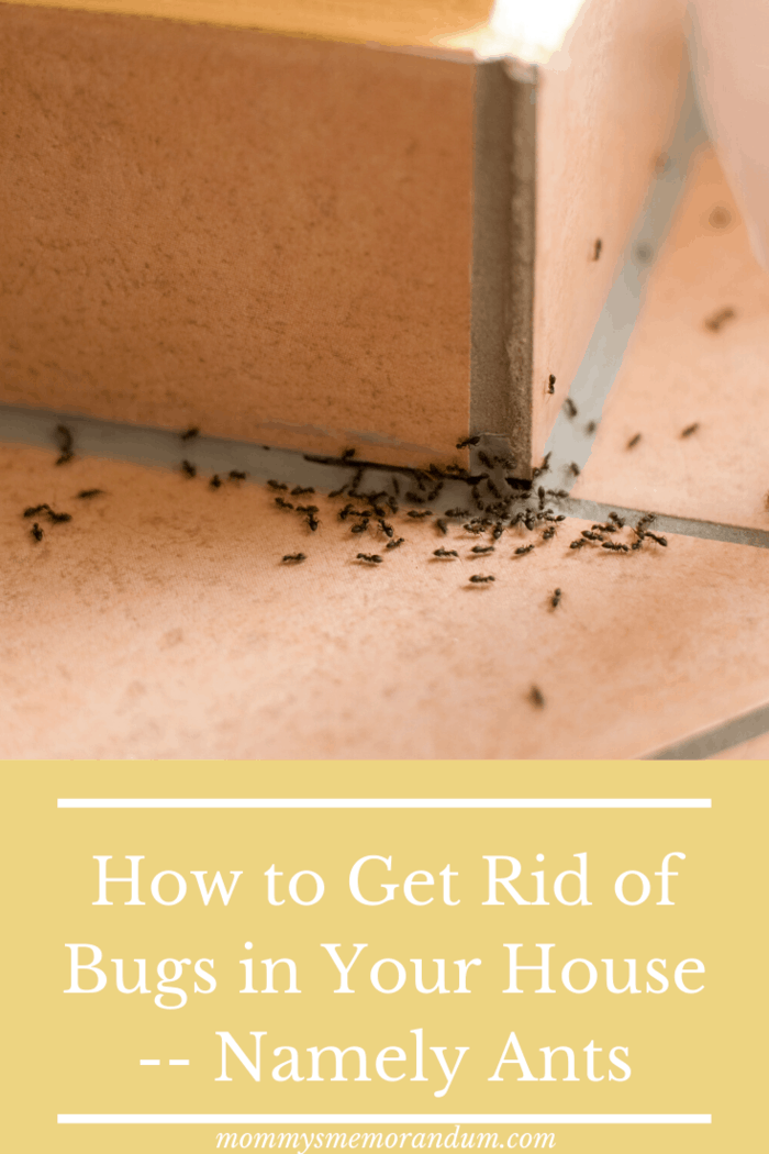 Ants are among the most common pets that homeowners battle.