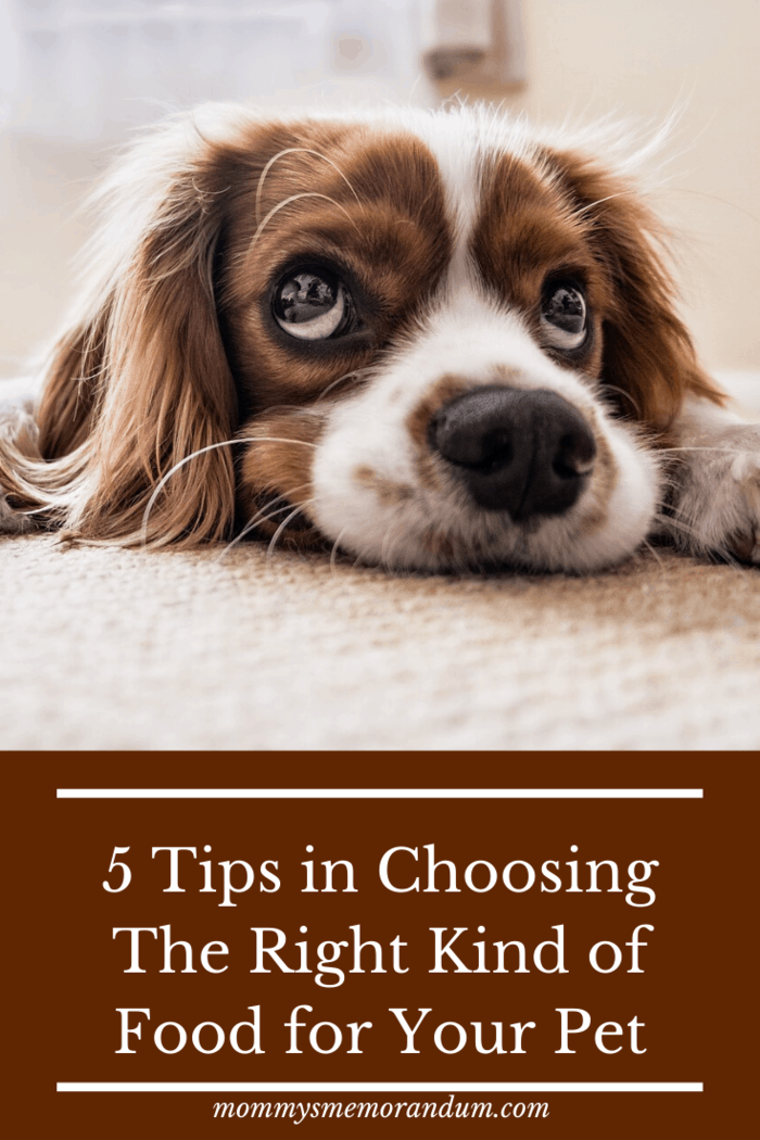 5 Tips in Choosing The Right Kind of Food for Your Pet