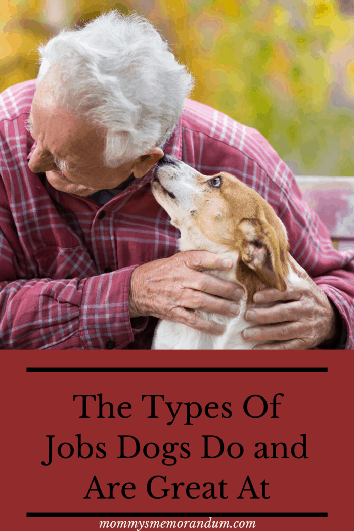 Animal-assisted therapy relies on using trained and certified animals to aid patients along their road to recovery from emotional and psychological trauma.