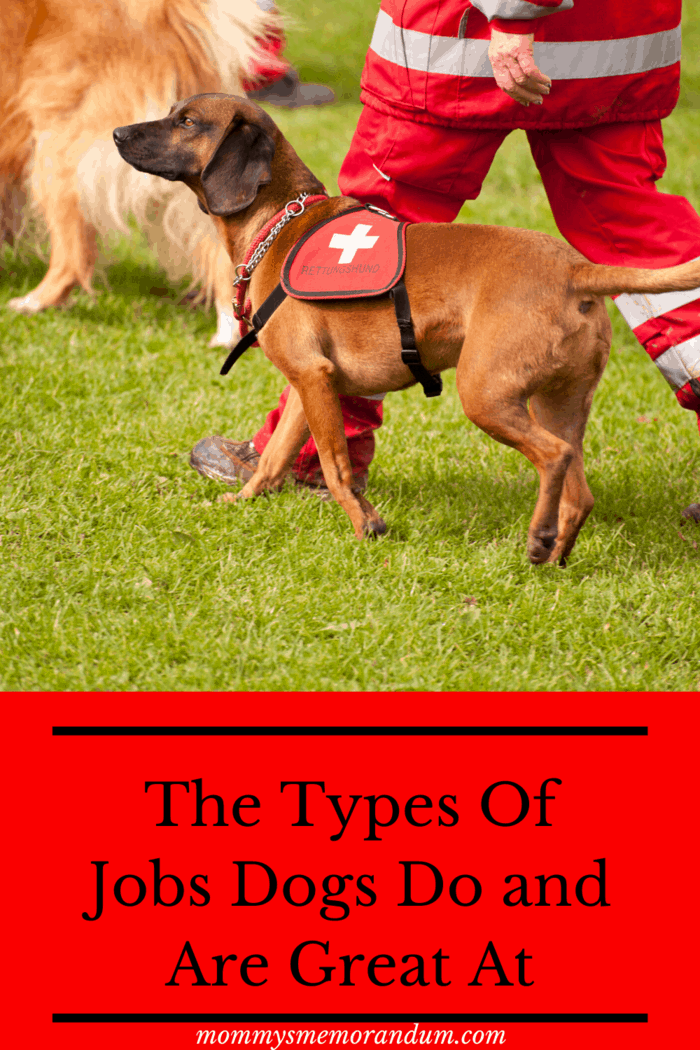Types of Jobs Dogs Do Among other things, K9s are trained to assist police and other law-enforcement personnel in their search for drugs, explosives, concealed weapons, blood, human remains, and other crime scene evidence.