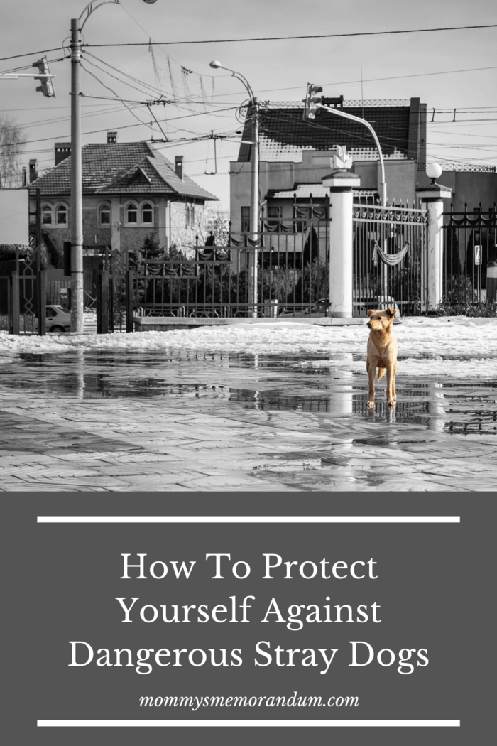 For animal lovers, finding a stray dog means wanting to offer help; here's how to protect yourself against dangerous stray dogs.