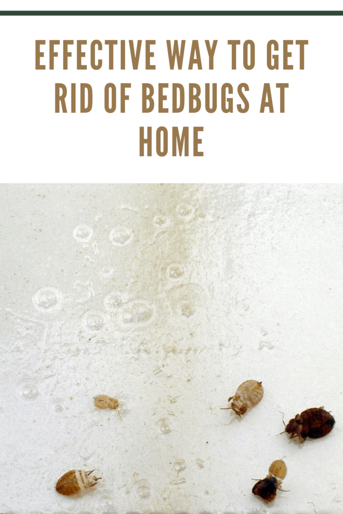 Here is a step by step guide of how you can effectively do away with bedbugs in your home: