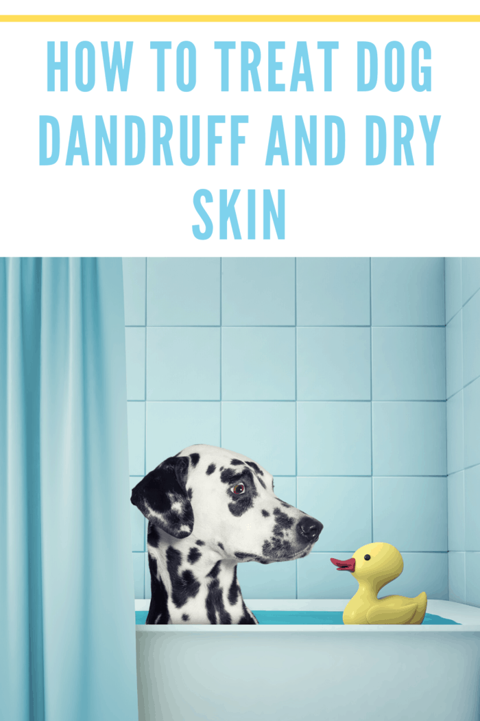 If your dog is suffering from a dry skin condition, moisturizing shampoo and regular baths are recommended.