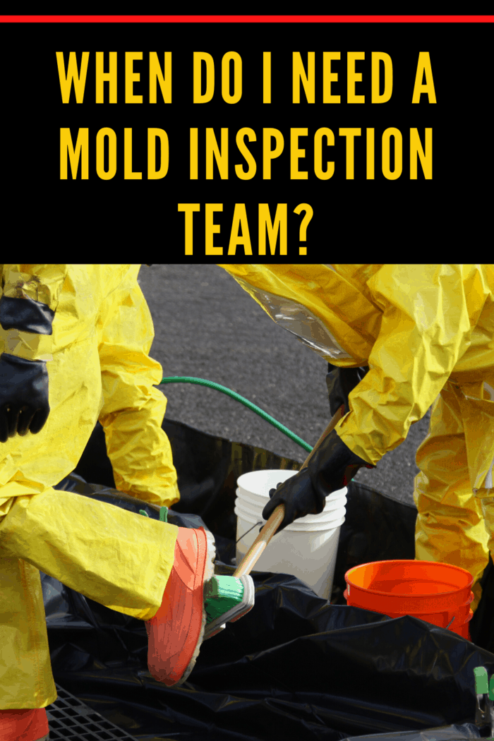 Do You Really Need the Services of a Mold Inspection and Removal Team?
