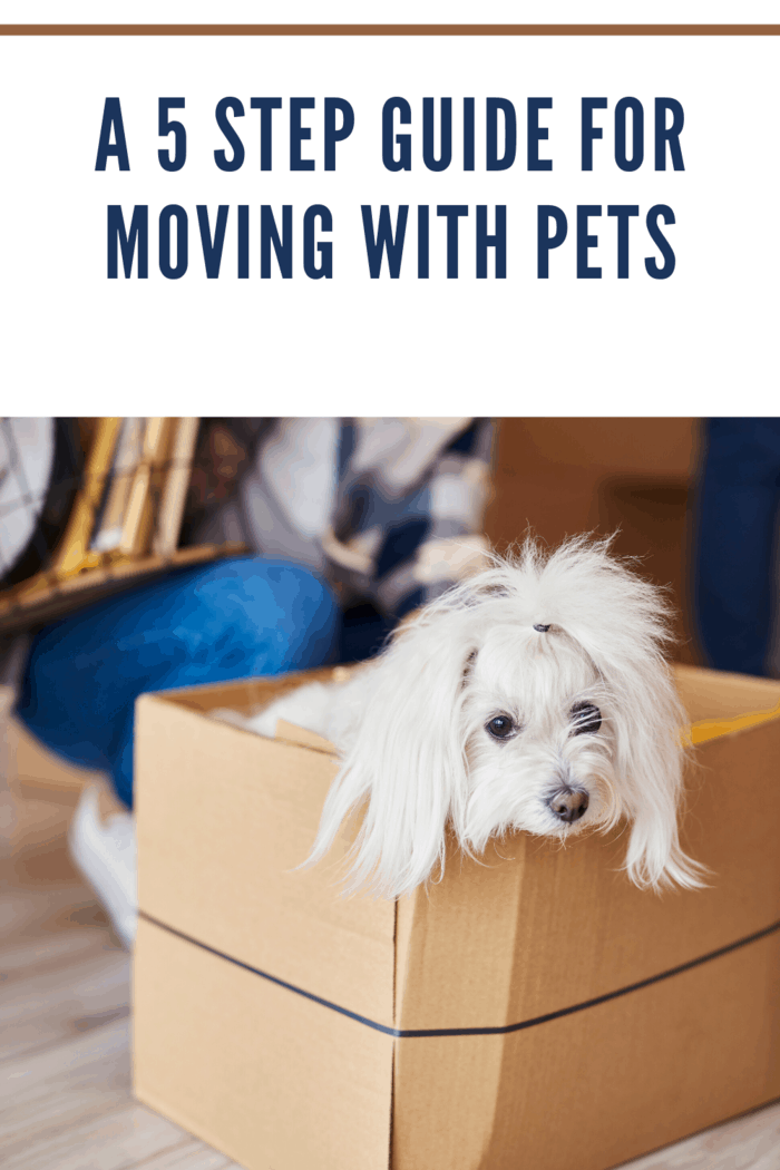 Here are five steps that could make moving with your pet more comfortable.
