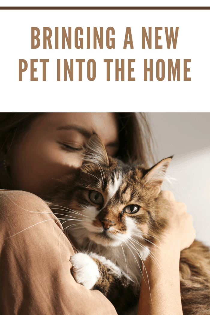 woman bringing a new pet into the home snuggling a cat