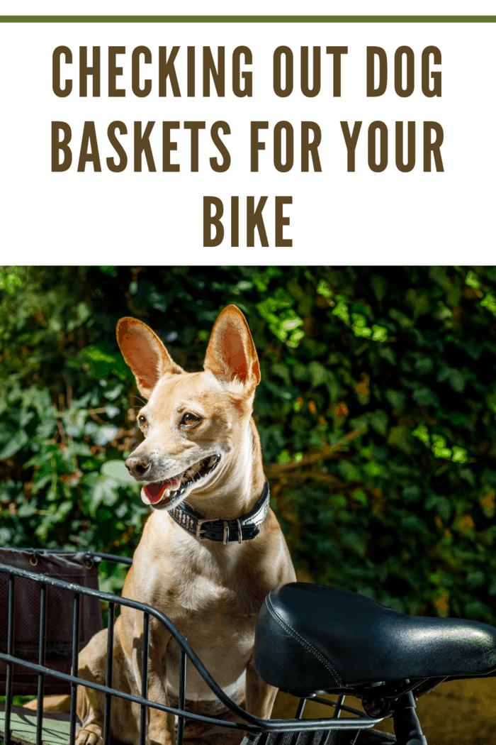 small dog in dog basket for bike