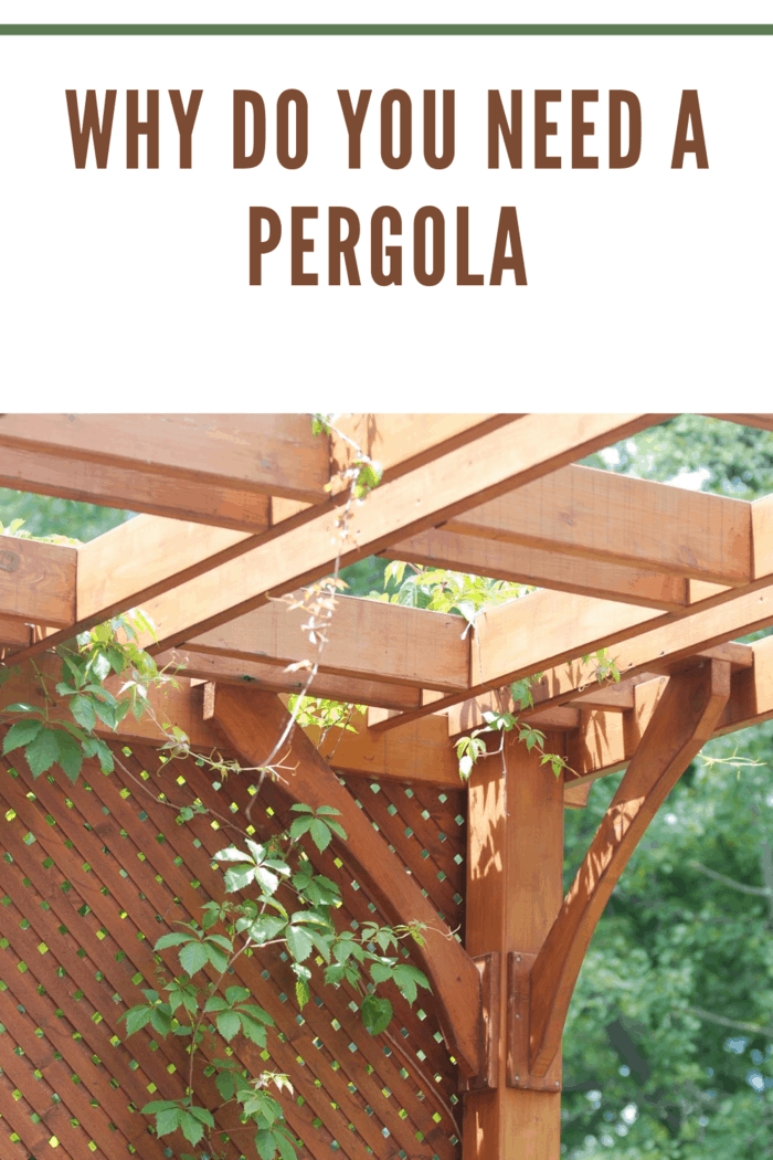 pergola up close with vines wrapping around it