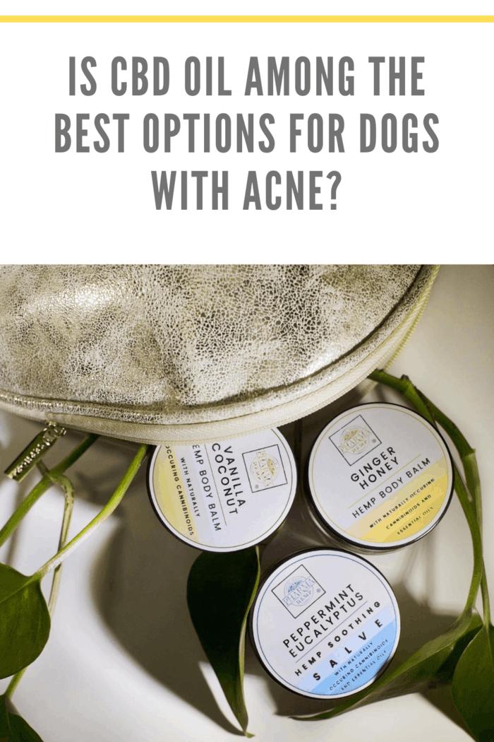 cbd oil salves on table for treating dog acne