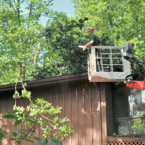 A forester in a high lift device, Patrick, uses a chain saw, to remove fallen trees from the roof of my house, A branch has been thrown to the ground and sawdust fill the air,