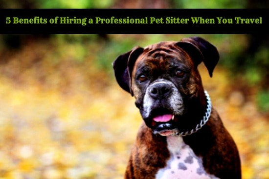 5 Benefits of Hiring a Professional Pet Sitter When You Travel