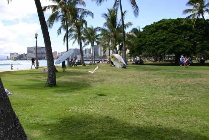 9 things to do in honolulu hawaii