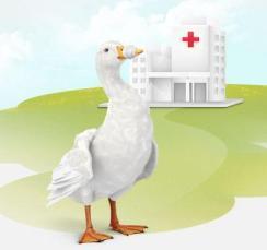Duck+Hospital