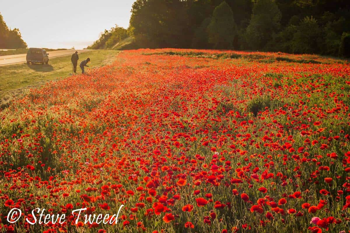 Steve Tweed Poppies Madison County North Carolina