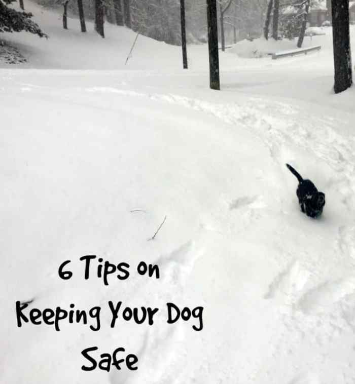 Keeping Your Dog Safe this Winter