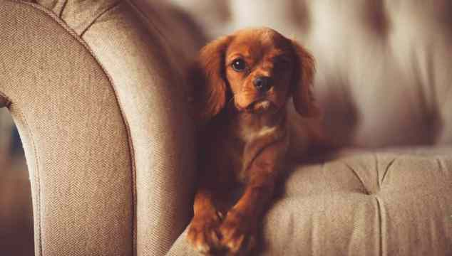 How To Keep Your Home Spotlessly Clean (Even With Pets!)