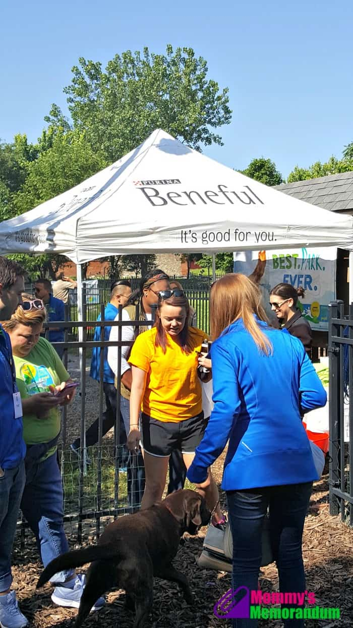 beneful beautifies frenchtown dog park
