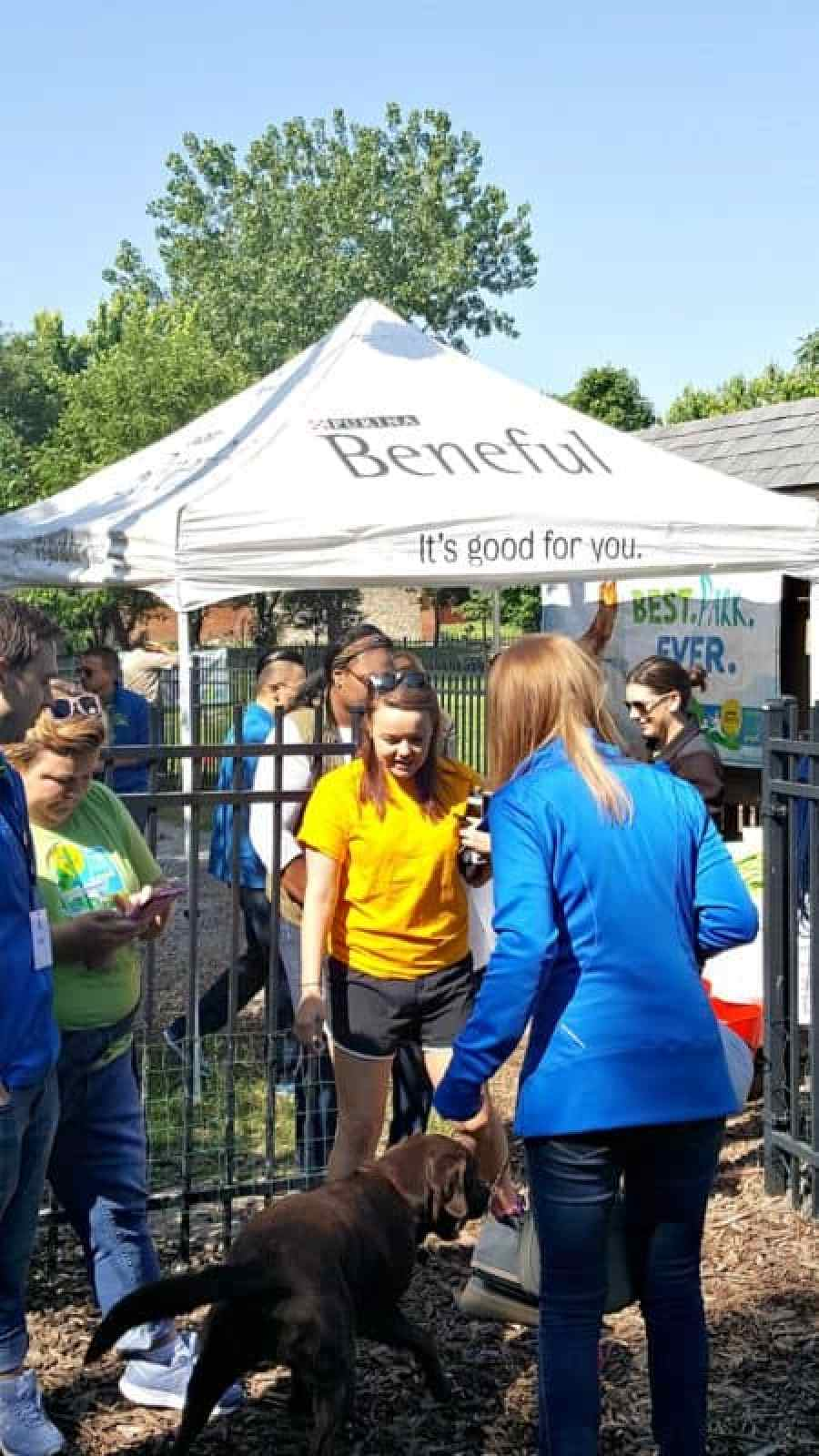 beneful dream dog park project at frenchtown dog park