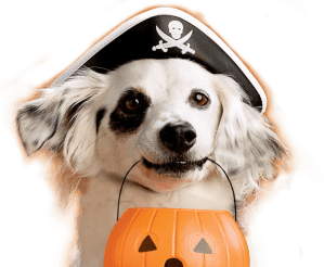 Halloween Has Gone To The Dogs! #TreatsForAll